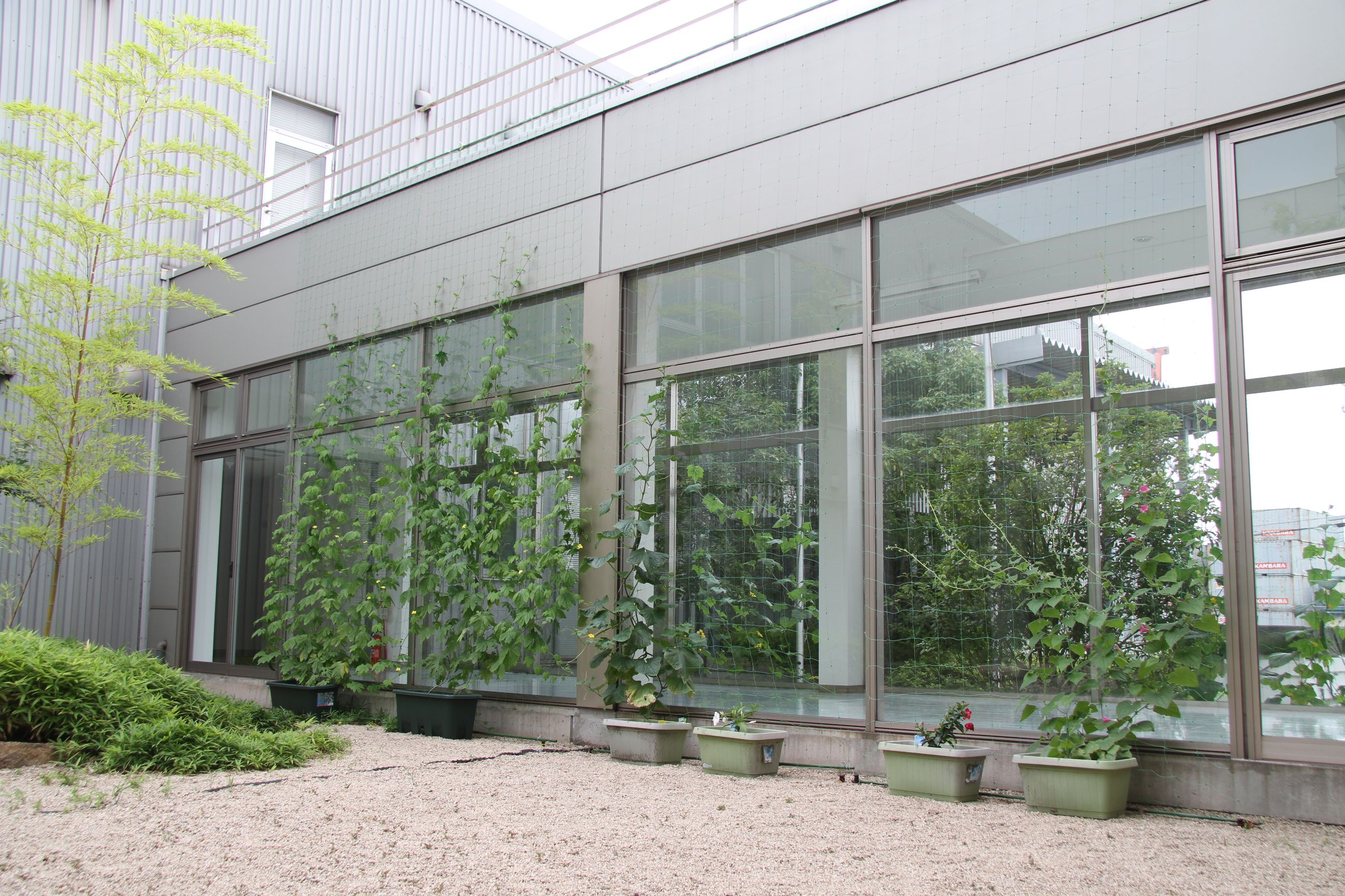 神原汽船福山物流センターの緑のカーテン